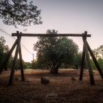 Olivos entre pinos